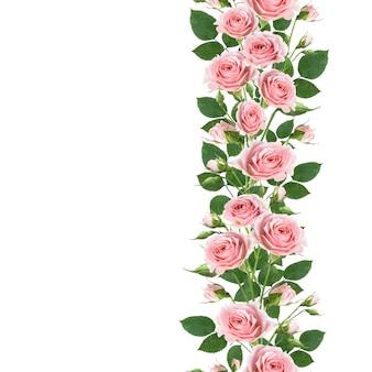 Seamless border pattern of branches climbing pink rose flowers with leaves and buds isolated on white wall