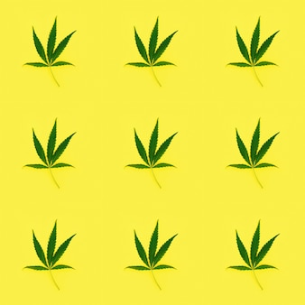 Seamless pattern cannabis leaves on yellow