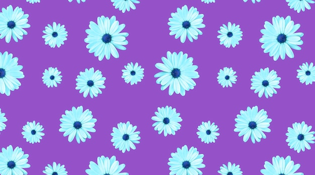 Seamless pattern of chamomiles with a blue center on a purple background