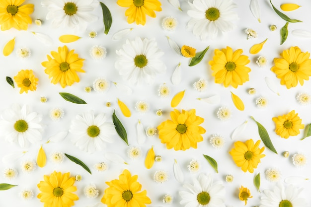 Seamless pattern of chrysanthemum and chamomile flowers on white background