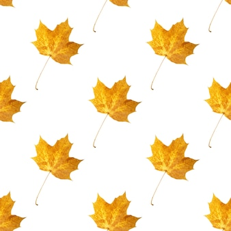 Seamless pattern of colored leaves isolated on white background