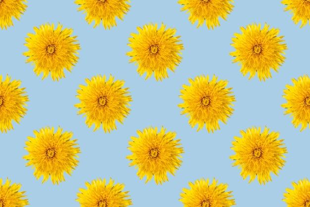 Бесшовный узор из цветущих одуванчиков желтого цвета на синем фоне, крупным планом, минимализм. может использоваться как естественный цветочный фон, элемент дизайна, обложки, открытки.