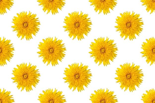 Бесшовный узор из цветущих одуванчиков желтого цвета на белом фоне, крупным планом, минимализм. может использоваться как естественный цветочный фон, элемент дизайна, обложка, открытка