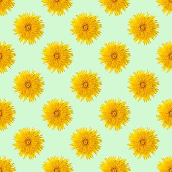 Бесшовный узор из цветущих желтых одуванчиков на светло-зеленом фоне мяты, крупным планом, минимализм, квадратная рамка. может использоваться как естественный цветочный фон, элемент дизайна, обложки, открытки.