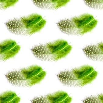 원활한 패턴 녹색 깃털 흰색 배경에 고립입니다. 고품질 사진