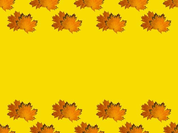 Бесшовный узор в виде линий сверху и снизу из желтых осенних кленовых листьев на желтом фоне. можно использовать как натуральный фон, осенний принт на ткани, оберточную бумагу, открытку.
