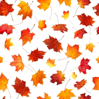 Seamless pattern of natural  autumn leaves falling down isolated