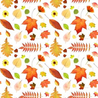 가 잎의 완벽 한 패턴