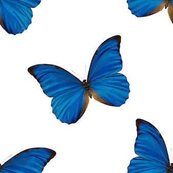 블루 나비의 완벽 한 패턴입니다. 아름다운 곤충의 자연 배경입니다.