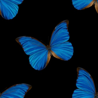 블루 나비의 완벽 한 패턴