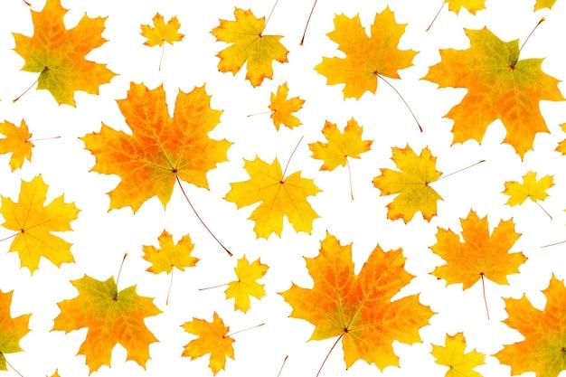 Бесшовный фон из натуральных оранжевых осенних листьев на белом фоне, как фон или текстура. осенние обои для вашего дизайна. вид сверху плоская планировка.
