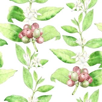 水彩コーヒー植物のシームレスなパターン