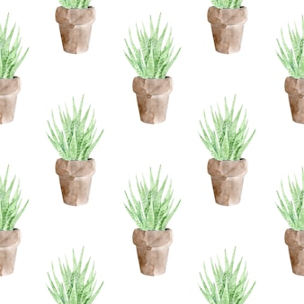 Seamless pattern of succulent plant in pot  on white background.
