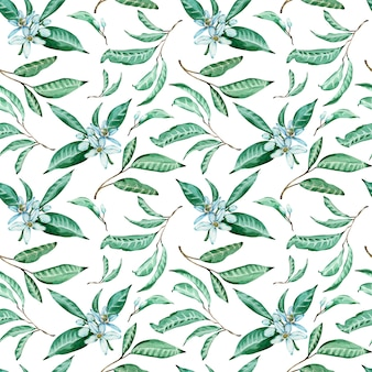 Seamless pattern of tangerine flowers and leaves on white background. watercolor tropical background.