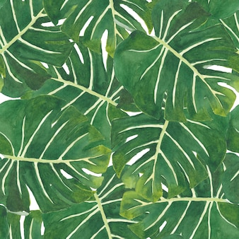 Seamless pattern watercolor of green monstera leaves