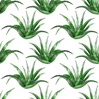Seamless pattern with aloe vera plant on white background
