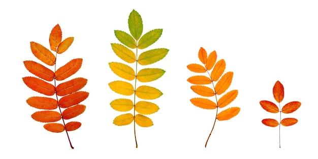 Бесшовный фон с осенними листьями рябины и красными ягодами