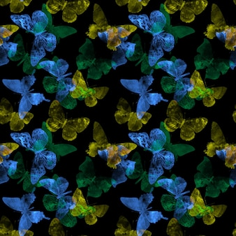 Seamless pattern with butterflies isolated on a black background. high quality photo