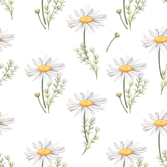Seamless pattern with camomile flowers and leaves