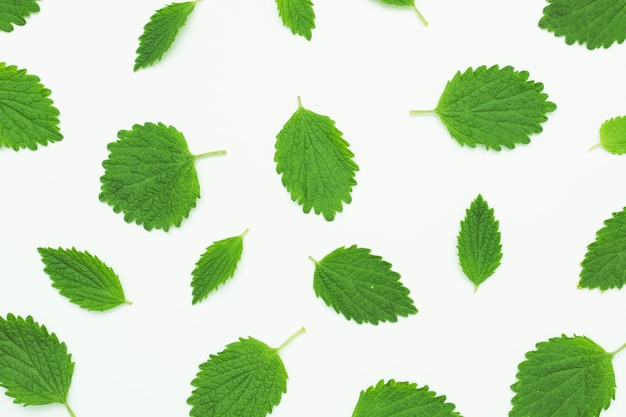 Seamless pattern with green fresh leaf on white background