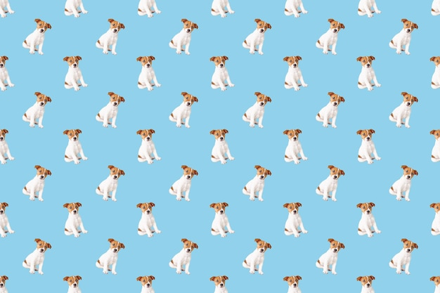 Seamless pattern with jack russell terrier dog on blue background