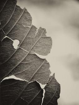 원활한 임의 채우기 나뭇잎 패턴 배경