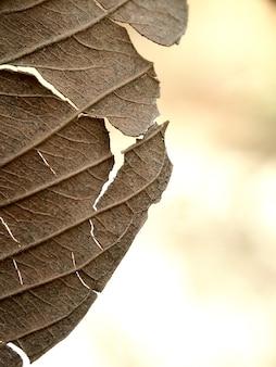 원활한 임의 채우기 잎