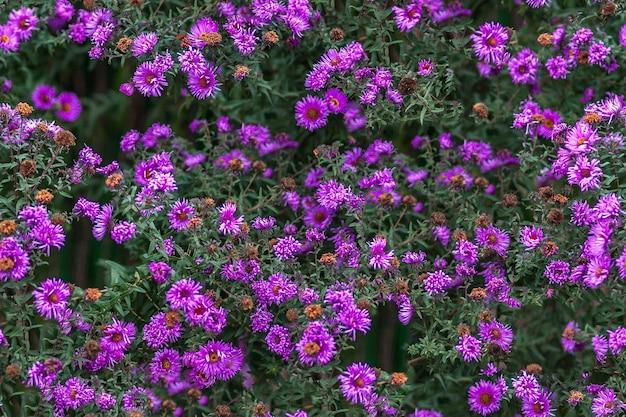 シームレスな質感の紫色の花の表面
