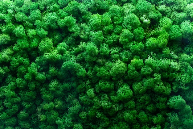 Seamless texture of wall decorated with phyto moss. green plant on a wall, green background from moss, wall from natural bushes