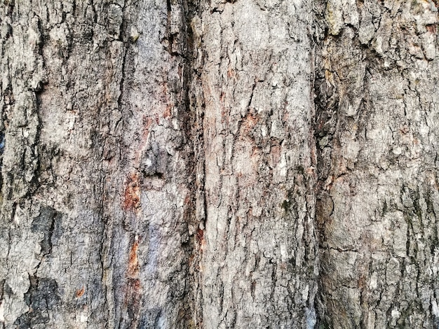 Seamless tree bark background