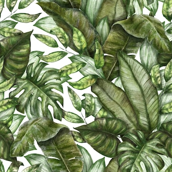 Seamless tropical pattern exotic background with palm leaves monstera colocasia banana leaves