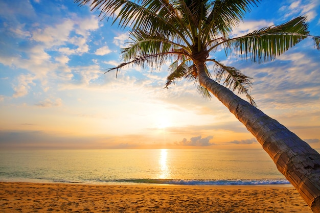 Seascape of beautiful tropical beach with palm tree at sunrise.