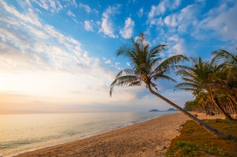 Seascape of beautiful tropical beach with palm tree at sunrise