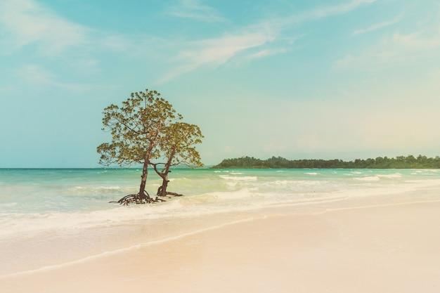 Морской пейзаж с мангровым яблоком одиноко стоит. винтажный цветовой эффект изображения. морская волна омывает стволы и корни мангровых зарослей. красивый морской пейзаж дикой природы в субтропиках.