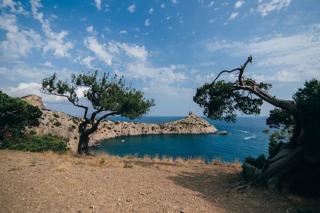 Морской пейзаж с сосной и мысом капчик крым