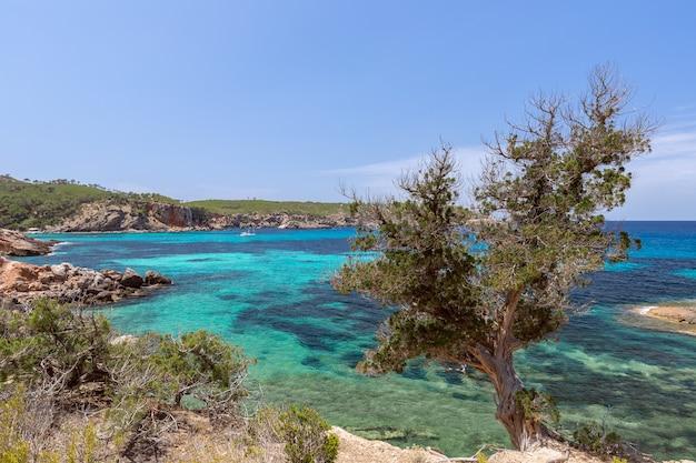 Морской пейзаж с деревом и бирюзовым морем побережья острова ибица, испания