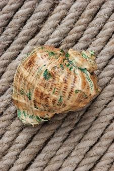 Seashell on the background of hemp rope