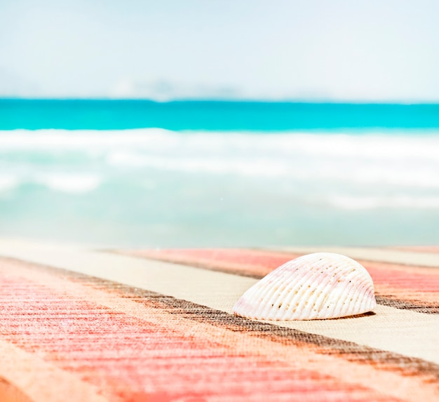 Seashell on background turquoise sea. summer vacation travel concept.