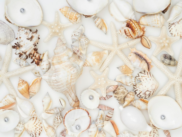 Seashell background with lots of different seashells piled together, top view