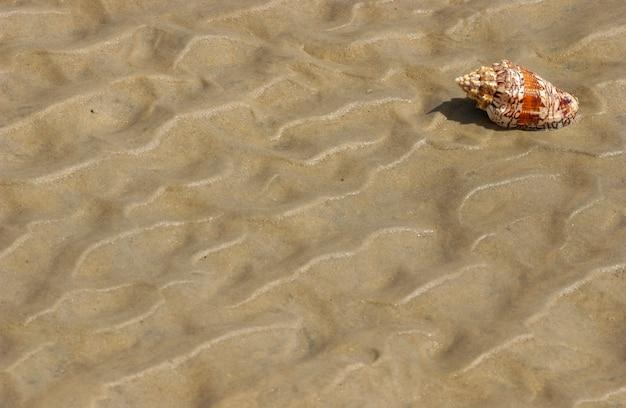 Seashell on the beach sand as a background.