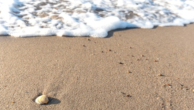 Seashell on the beach with waves on the baltic sea.