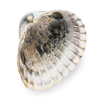 Морская ракушка, изолированные на белом фоне. вид изнутри