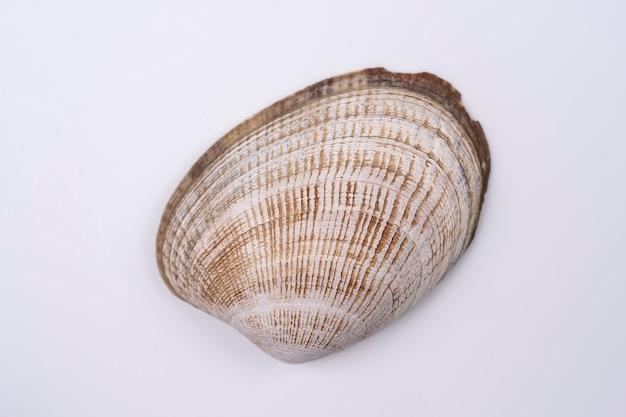 白い背景で隔離の貝殻クローズアップビューマクロ撮影の貝殻の目に見えるテクスチャ