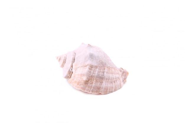 Seashell, изолированные на белом, вырезать