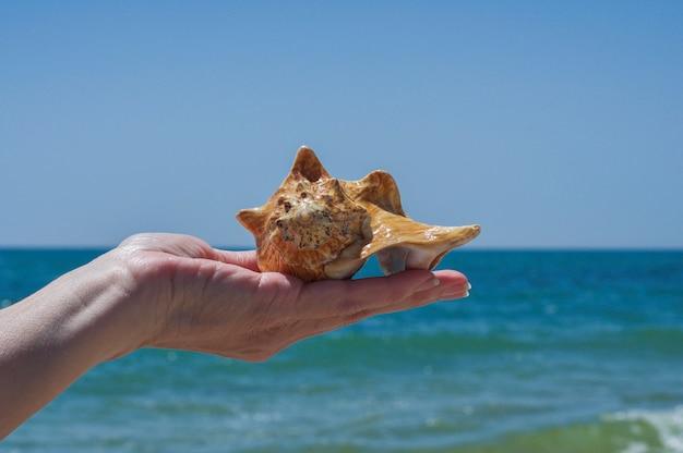 Seashell in man's hand