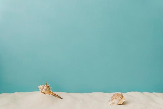 Морская ракушка на песке на синем фоне