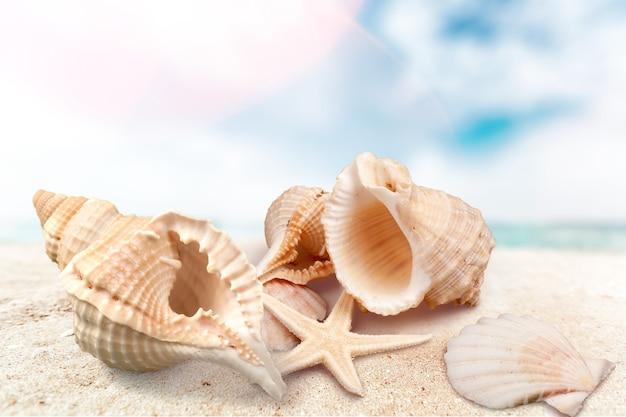 Морская ракушка на песчаном берегу моря. концепция путешествия