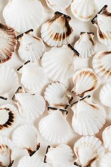 Образец морской ракушки на белом