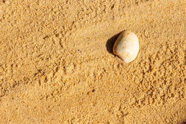 Seashell on sand. top view sandy summer background.