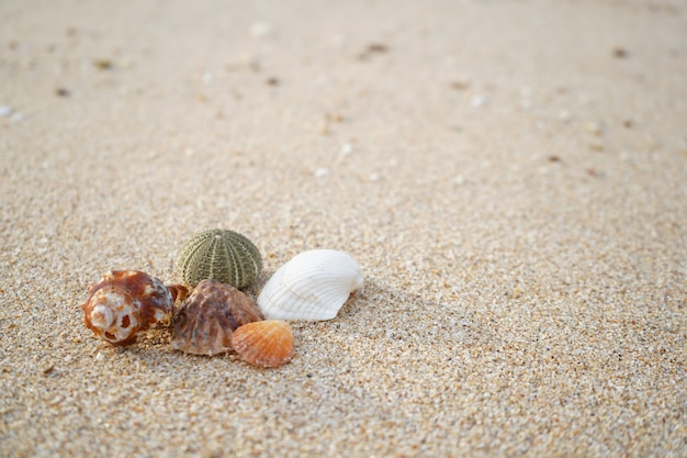 Seashell and sand with warm light background